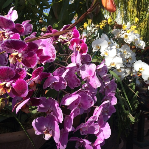 Orchid Show 3