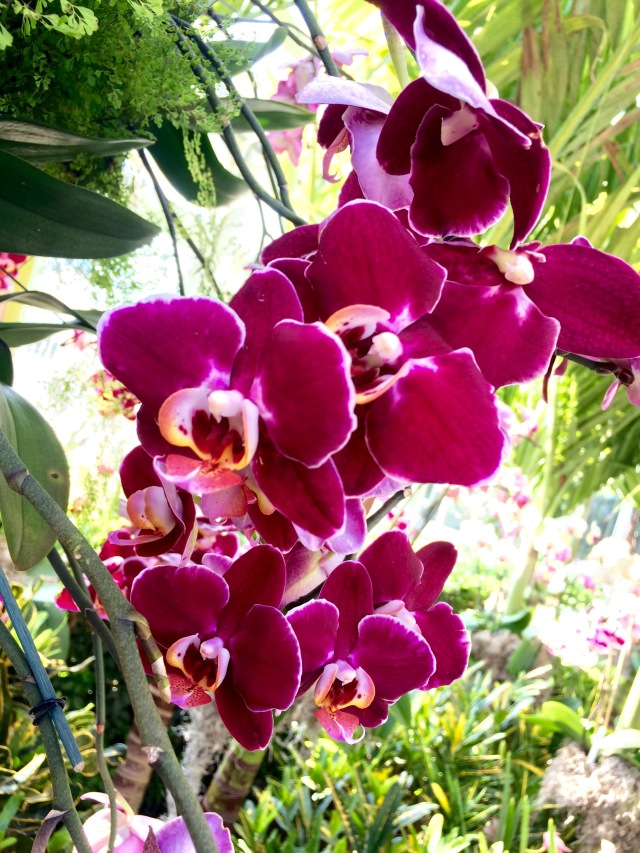 Orchid Show 4