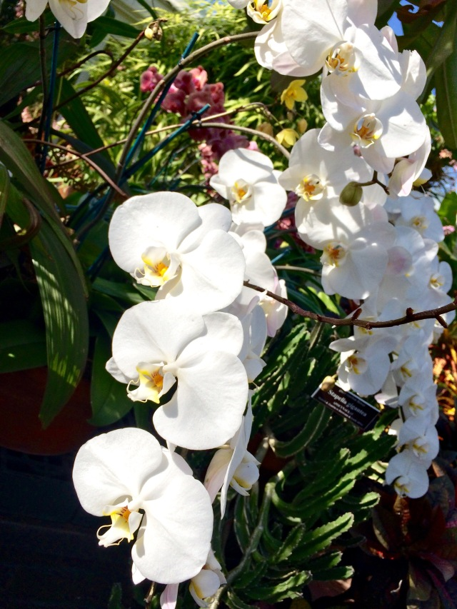 Orchid Show 5