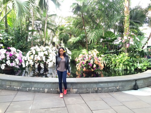 Orchid Show 7