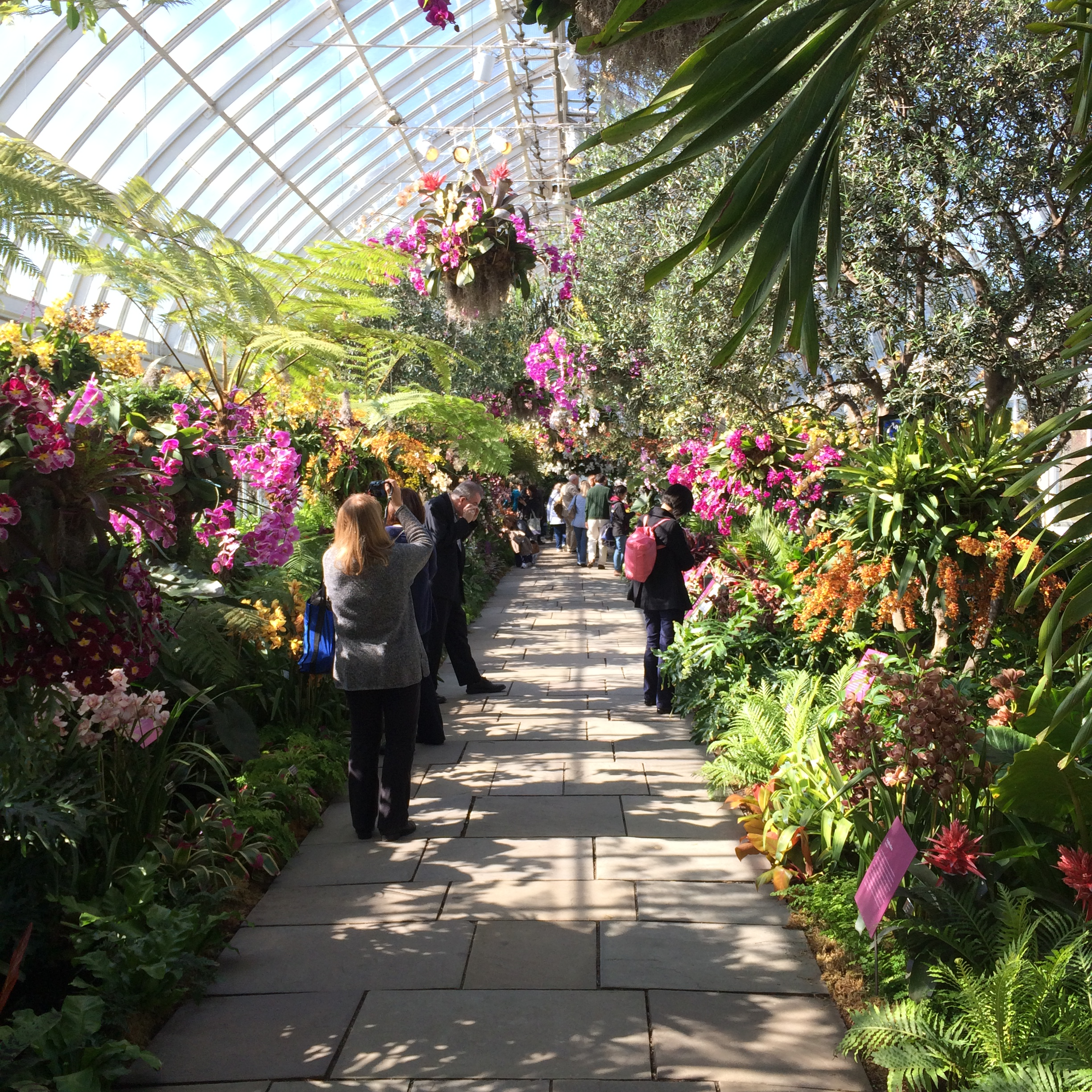 A breathtaking day at the orchid show when i entered the orchid show i didnt know where to look throughout the show are hanging flower baskets colorful column displays and the biggest flower mozeypictures Gallery